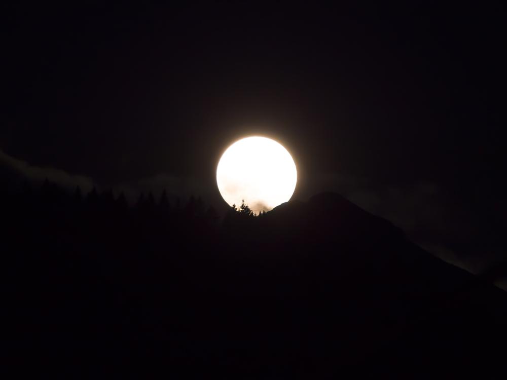Mond-Waldwipfel-nacht